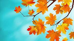 Как сказать по-английски «Бабье лето — Золотая осень» — примеры
