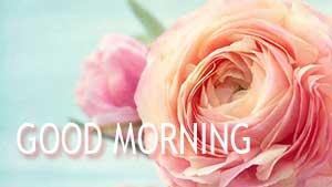 Как пожелать доброго утра на английском — открытки