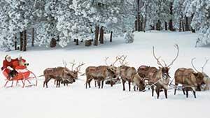 Имена всех оленей Санта Клауса на английском с переводом