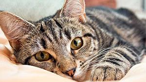 Топик на английском про домашнее животное