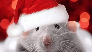Поздравительные открытки и пожелания — год Крысы 2020