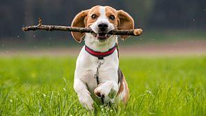 Основные команды для собак на английском языке с переводом